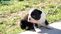 Mignons bébés animaux Debout pour la première fois et faire vos premiers Compilation [HD VIDEO]