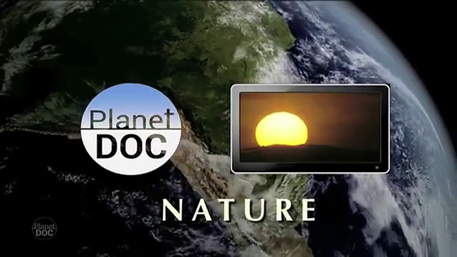 Southern Right Whales in Peninsula Valdés | Nature - Planet Doc Full Documentaries