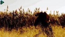 Γιώργος Νταλάρας - Τα Όνειρα (Official Video Clip)