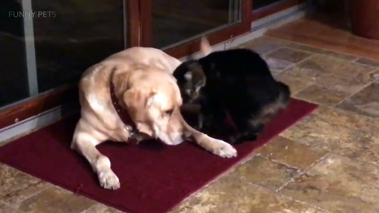 Funny Pets  Funny Cats And Dogs Playing (Part 2) [Funny Pets]