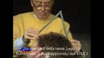 Lo standard del Lagotto Romagnolo