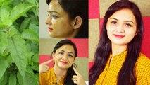 Tulsi Face Pack लगाने से Skin करेगी Glow और रहेगी Fresh-Fresh |Boldsky