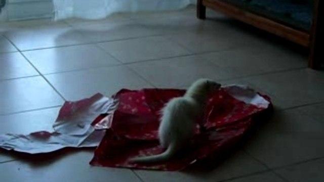 Rubis et papier cadeau.MOV