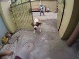 En plein parkour il tombe nez à nez avec un énorme chien