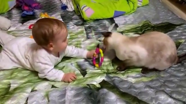 Cat Playing with Baby - Best of Cute Cats Love Babies Compilation