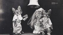 Oubliez les lolcats du Web: admirez ces chats photographiés en 1914!