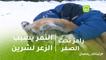 رامز تحت الصفر | النمر يتسبب فى حاله ذعر للنجمه  شرين عبد الواهاب