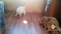Ce chat devient FOU avec une lumière au sol !