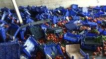 Bayrampaşa'da domates yüklü kamyon devrildi...Tonlarca domates yola saçıldı