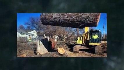 Tree Cutting videos - dailymotion