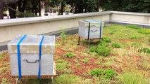 Vienne: trois ruches sur le toit de l'office du tourisme