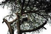 Vidéo. Tours : huit arbres à abattre au parc des Prébendes