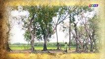 THVL | Chuyện xưa tích cũ – Tập 48[3]: Phan Lăng luôn tìm cớ nói dối Thu Hương để không phải ra đồng