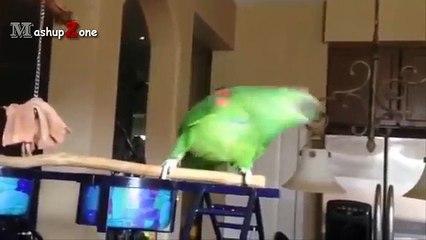 Parrots Dancing - A Funny Parrot Videos Compilation || NEW HD