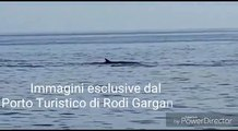 Puglia: 7 grossi cetacei a largo del Gargano