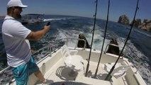 Ce lion de mer grimpe sur un bateau pour reclamer du poisson... petit flemmard