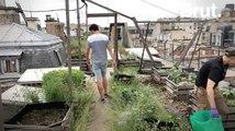 Un jardin potager expérimental sur les toits d'AgroParisTech