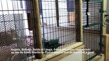 Quatre lions recueillis par Tonga terre d'accueil