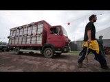 Banksy truck 'Sirens of the Lambs' at Glastonbury Festival
