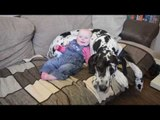 Cute seven-month old baby best friends with 'big sister' - an enormous GREAT DANE