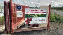 Pierre Guyomar ouvre au public sa serre à tomates
