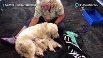 Anjing melahirkan 8 ekor anak anjing di bandara Tampa - TomoNews