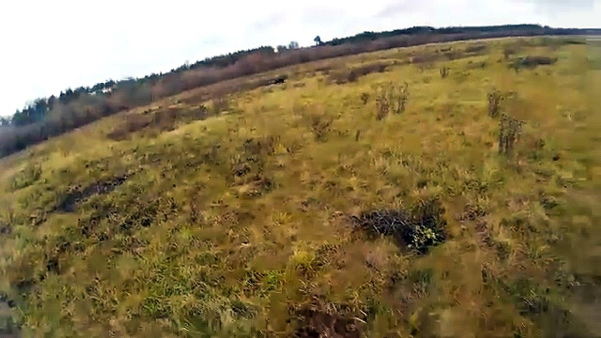 Охота на зайца - работа дратхаара со стойкой / Hare hunting - Deutsch Drahthaar pointing hare
