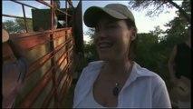 Les Lions Blancs  Reportage Fascinant Sur Un Animal Majestueux