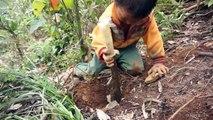 Xã Tà Xùa, thị trấn Bắc Yên, huyện Bắc Yên, Sơn La: Bé trai người H'Mông và kỹ năng đào tìm củ...