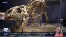Un T-Rex quasi complet est à découvrir tout l'été au Muséum d'histoire naturelle de Paris