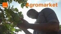 AgroMarket - Start-up Stories Saison 2
