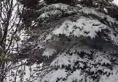 June Snow Blankets Parts of Newfoundland