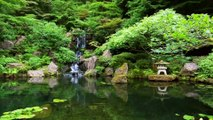 Relaxation Music: Relaxing Music for Sleep, Spa, Zen, Study, Yoga or Meditation