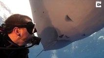 Ce plongeur nage avec une raie manta énorme... Experience magnifique