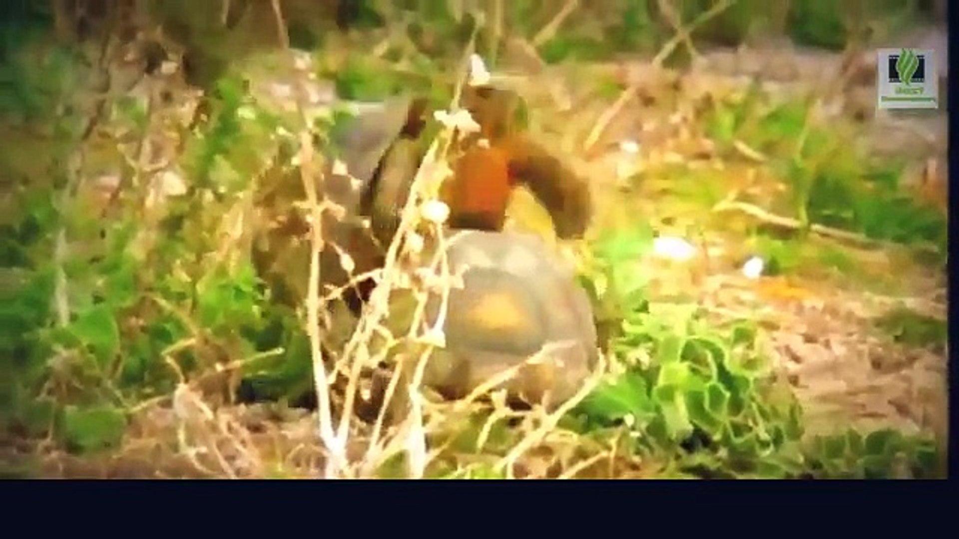 Snake Documentary Snake Documentary Amazing Life of Turtles and Tortoises - Nature Documentary Fil