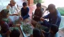 Activité effeuillage des tiges des plantes aromatiques