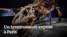 Voici à quoi ressemble le squelette de tyrannosaure exposé au Jardin des plantes de Paris