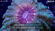 Imágenes hipnotizantes de los arrecifes de coral