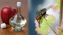 Home Remedies to get rid of Houseflies: मक्खियों से छुटकारा दिलाएंगे ये आसान घरेलू उपाय   Boldsky