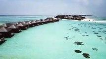 Paradise is Maldives! ✨   : Ashley Alexiss   : Cocoon Maldives   #VisitMaldives #Maldives #SunnySideofLife #travel #destination #tropicalvibes #green #palmtr