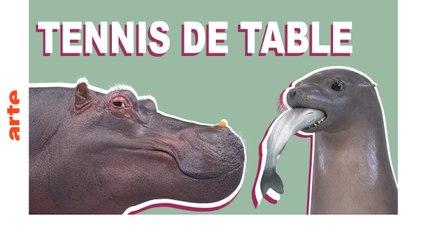 Tennis de table - ATHLETICUS - ARTE