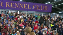 Westminster Kennel Club Dog Show : Daytime Session ตอนที่ 3 พากษ์ไทย