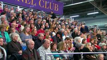 Westminster Kennel Club Dog Show : Daytime Session ตอนที่ 4 พากษ์ไทย