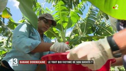 République dominicaine : le succès des bananes bio