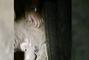 Brasil: recién nacida es rescatada por la Policía horas después de haber sido enterrada por sus familiares