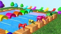Aprender colores Aprender animales Nombre y sonido w Animales Natación Competencia