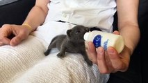 LIVE: This foster kitten is about to get bottle fed and it's TOO MUCH CUTENESS