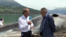 Hautes-Alpes : le maire de Savines-le-lac heureux de la réussite du buzz du cachalot