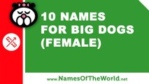 10 female dog names from films and series - the best pet