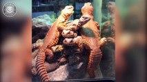 Baby Reptiles  Cute and Funny Reptile Videos Compilation (2018) Reptiles Video Recopilación